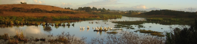 Photo Credit: Watsonville Wetlands Watch