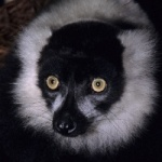 Duke Lemur Center photo 1