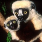 Duke Lemur Center photo 3