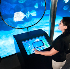 Interactive technology at VA aquarium