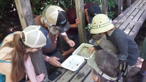 Stream explorers observe the behavior and characteristics of aquatic invertebrates during the Pink Beds BioBlitz in the Pisgah National Forest.