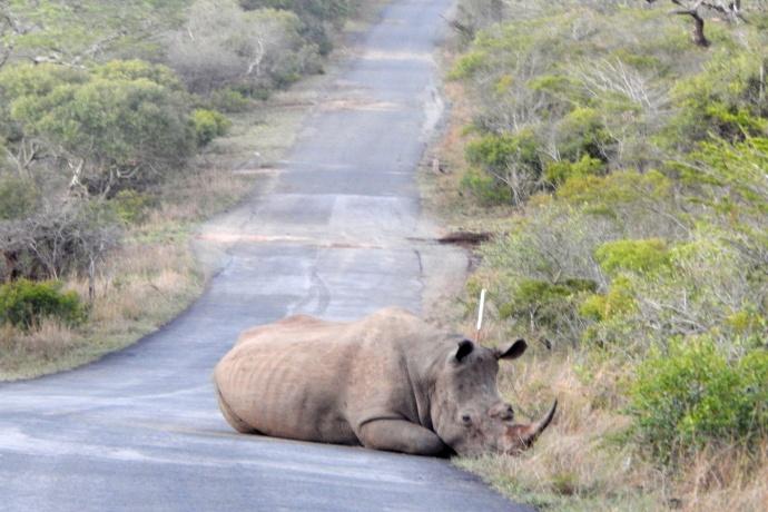hluhluwe-game-reserve-rhino