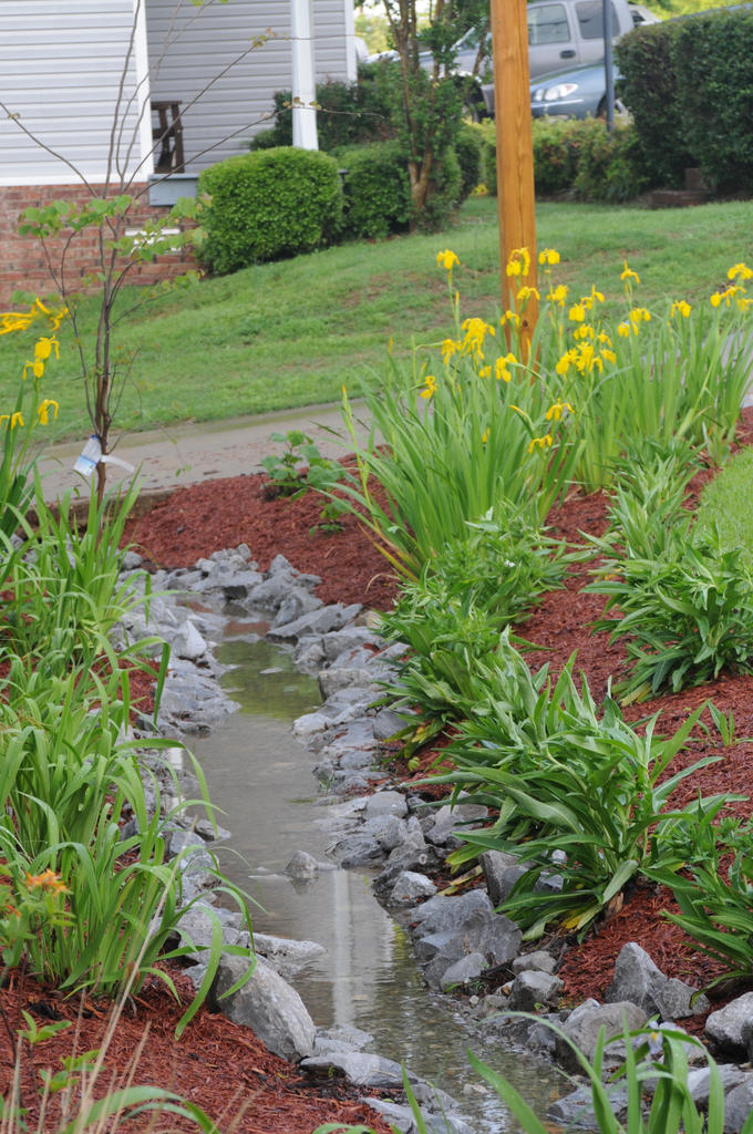 rain garden swale 2 (gallo)