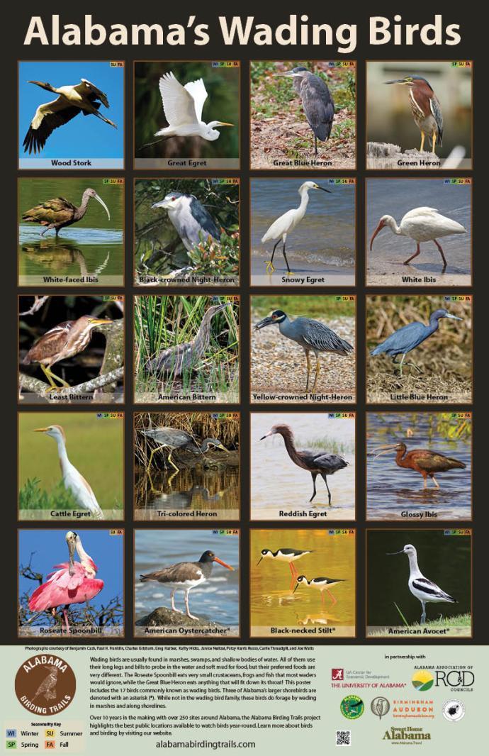 BirdsofAlabama-wadingbirds