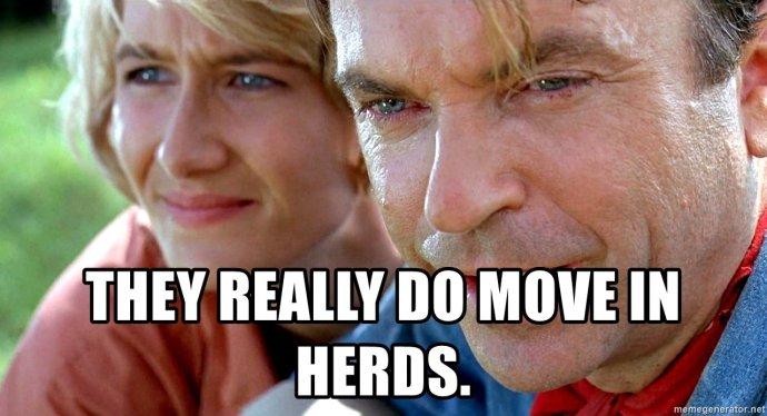 they-really-do-move-in-herds