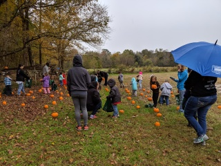 Picking pumpkins from the pumpkin patch